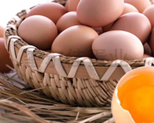 盐城鸡蛋批发